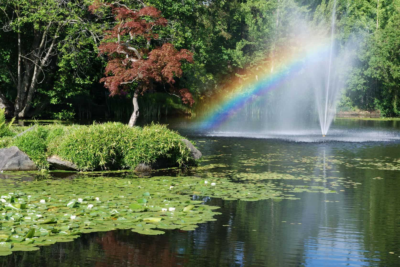 fountain with pond, rainbow and Japanese maple