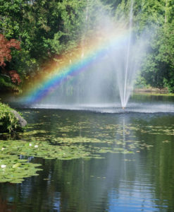 rainbow through fountain in pond