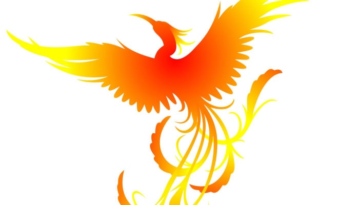 red orange and yellow phoenix
